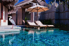 Private pool and a bird in luxurious villa Royalty Free Stock Photography
