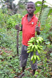 PRIVATE AND STUDY OF CHILDHOOD. African child holding a fresh bunch of bananas in nature, deprived of her childhood and classroom study. While child labor is Royalty Free Stock Photo