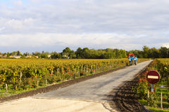Private vineyard and tractor Stock Photography