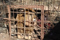 Private zoo in Hargeisa. Stock Image