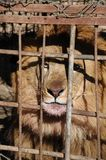Private zoo in Hargeisa. Royalty Free Stock Photography