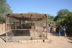Private zoo in Hargeisa. Stock Photo