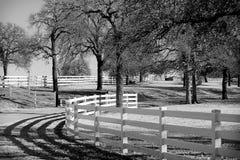 Privatlebenlandwirt Pferdzüchtung Stockbilder