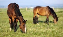Privatlebenlandwirt Pferdzüchtung Lizenzfreies Stockfoto