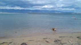 Privlaka, первый плавать всегда Стоковое Фото