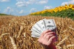 Prix de blé ou concept d'affaires d'agriculture Image stock