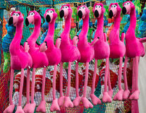 Prize Flamingos Royalty Free Stock Images