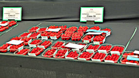 Prize Strawberries Royalty Free Stock Image