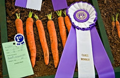 Prize Winning Imperator Carrots Stock Images