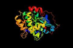 PRKACA, un enzima regolatore chiave responsabile del phosphorylating Immagine Stock