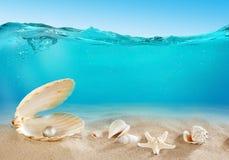 Pärlemorfärg undervattens- Royaltyfria Foton