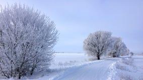 Prości śnieżni opona ślada - portret zdjęcia stock