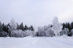 Prości śnieżni opona ślada - portret Obrazy Stock