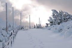 Prości śnieżni opona ślada - portret fotografia royalty free