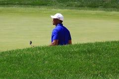Pro игрок в гольф Tiger Woods стоковое фото rf