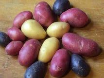 Pro картошки Specie покрашенные Rara Стоковые Фото