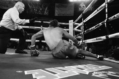 Pro Boxing in Phoenix, Arizona. Young male pro boxers fight in Iron Boy XIV in Phoenix, Arizona, USA, at the Celebrity Theatre, July 26, 2014. Here, a young Royalty Free Stock Photos