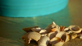 Prości Seashells Zdjęcia Stock