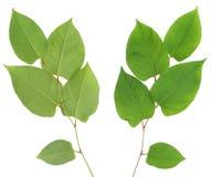 pro contra grön växt Royaltyfri Bild