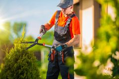 Pro giardiniere Plants Trim Fotografia Stock Libera da Diritti