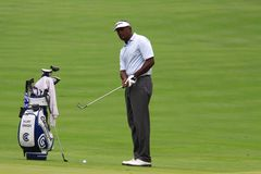 Pro golfer Vijay Singh. Vijay Singh of Fiji prepares to chip his ball on the green on the PGA Tour event Stock Photos