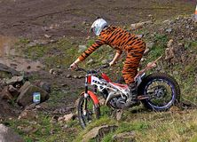 Probemotorradfahrer, der auf Fahrrad in der Tigerklage steht Stockfotografie