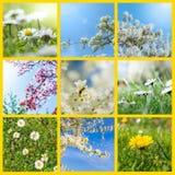 Probenehmer von Frühlingsblumen Lizenzfreies Stockbild