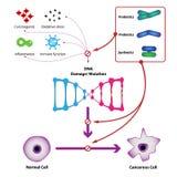 Probiotic bacteria prevent DNA damage and mutation. Prevent the formation of cancer cells. Medical vector illustration royalty free illustration