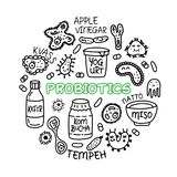 Probiotics细菌食物医学集合ciircle概念 向量例证
