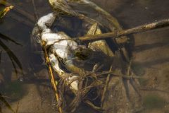 Problème écologique : une grenouille sur un sachet en plastique photos libres de droits
