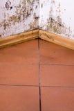 Problème de moule dans la maison Photo libre de droits