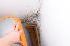 Problème de moule dans la maison Photo stock