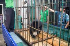 PROBLÈMES ENVIRONNEMENTAUX DE L'INDONÉSIE Photos libres de droits