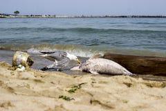 Problem związany z ochroną środowiska delfiny umierają Obraz Stock