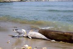 Problem związany z ochroną środowiska delfiny umierają Zdjęcie Stock