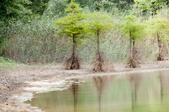 Problema del agua de la tierra Fotografía de archivo libre de regalías
