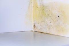 Problema do molde na casa Fotos de Stock