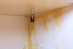 Problema do molde na casa Fotografia de Stock Royalty Free