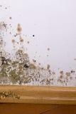 Problema do molde na casa Imagem de Stock Royalty Free