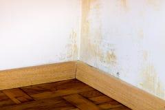 Problema do molde na casa Imagem de Stock