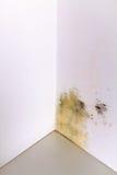 Problema do molde na casa Imagens de Stock Royalty Free