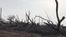 Problema ecologico di inquinamento ambientale causato da fumo e da fuoco sulle sponde del fiume video d archivio