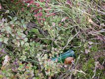 Problemas e poluição ecológicos da natureza por desperdícios imagens de stock royalty free