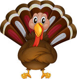 A problematic turkey Royalty Free Stock Photography