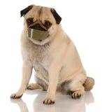 Problemi del cane di scortecciamento Immagini Stock Libere da Diritti