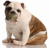 Problemi del cane di scortecciamento Fotografia Stock Libera da Diritti