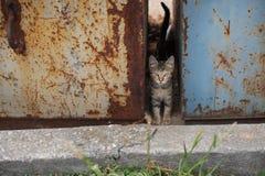Problemlittle strimmig kattkattunge med gröna ögon i avfall Arkivbilder