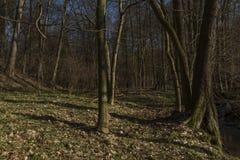 Probostovsky liten vik nära den Bynov byn i vårafton Royaltyfri Foto