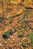Procédure de connexion moussue HDR Image libre de droits