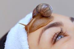 Procédure de Cosmetological Belle jeune femme avec un ahatin d'escargot sur son visage photographie stock libre de droits